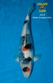 Most Unique koi HKS 2014 FB